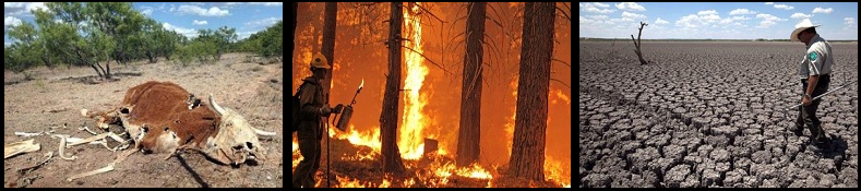 Drought affects the food supply and can cause wildfires to spread farther faster.